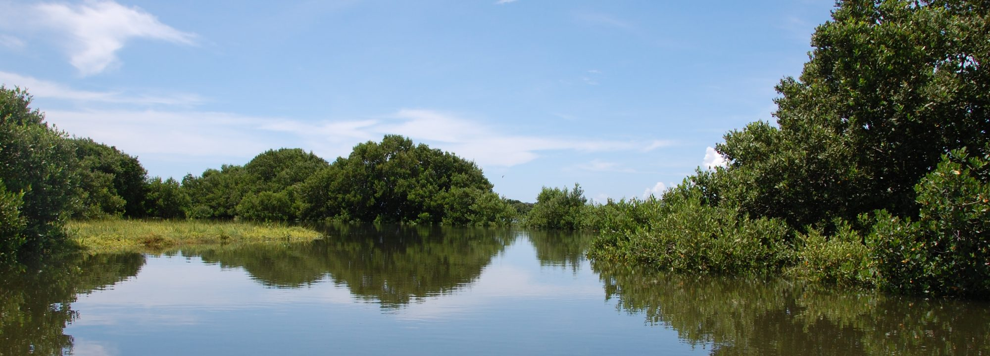 Florida's Nature Coast Conservancy